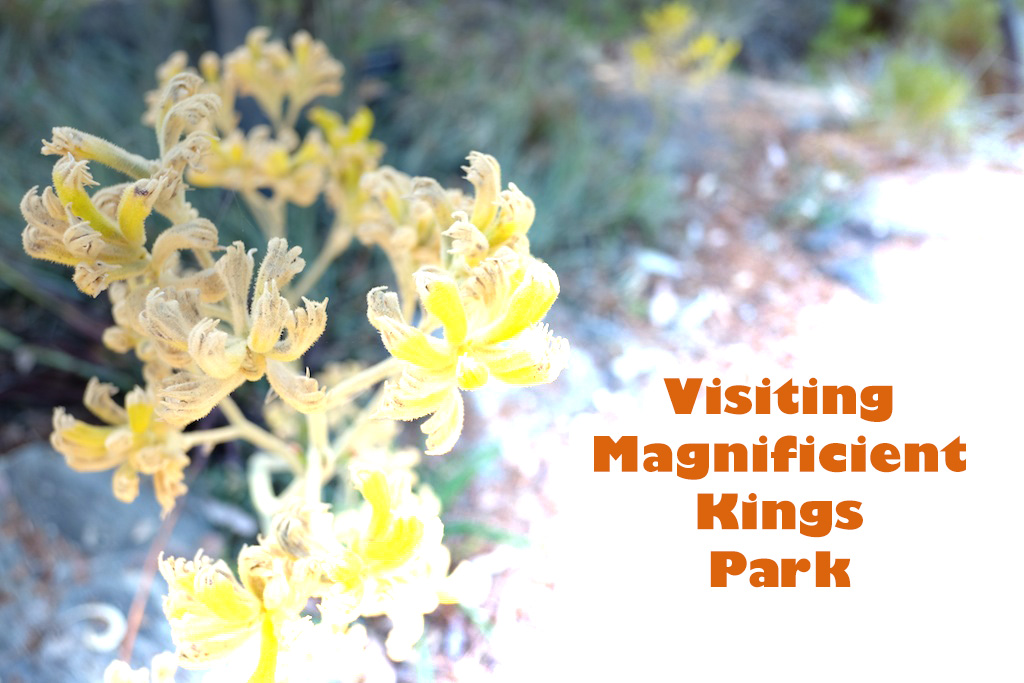 kings_park_redo-9-feature-image