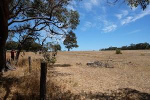 Dry farm land.